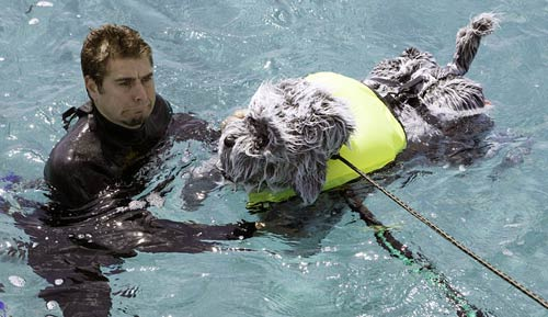 Tory Belleci swimming with dog